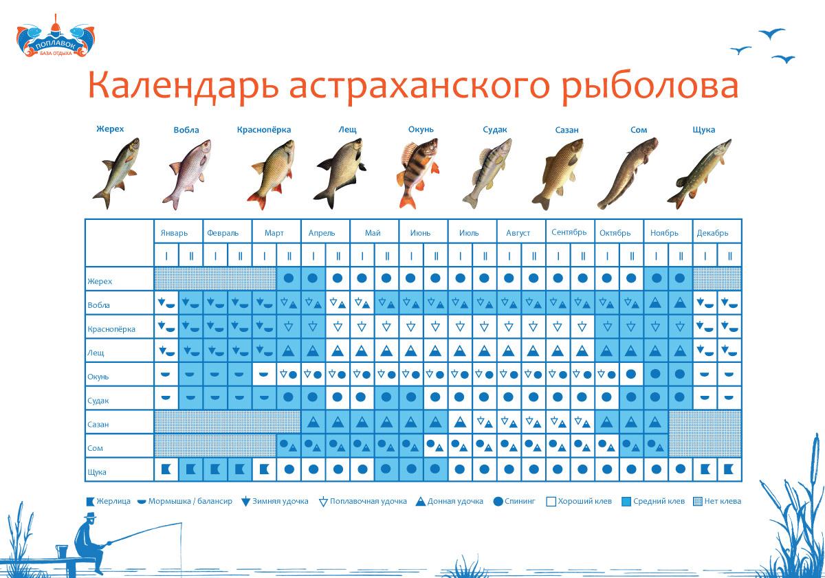 Календарь клёва